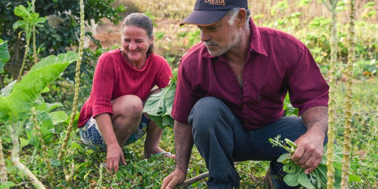 Agricultura Familiar e Cooperativismo serão temas de webinário idealizado pela Seapa